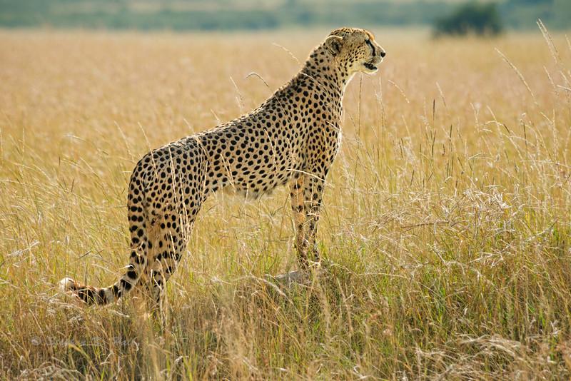 East African Wildlife 2012