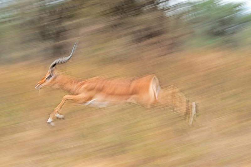 East African Wildlife (Kenya & Tanzania) 2010/2011