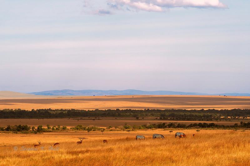 Kenya/Tanzania 2010
