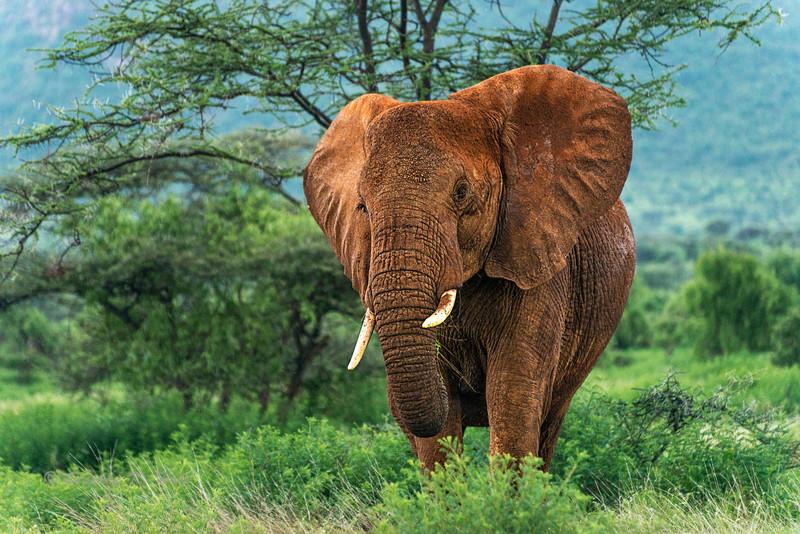 Samburu & Buffalo Springs, Kenya 2013