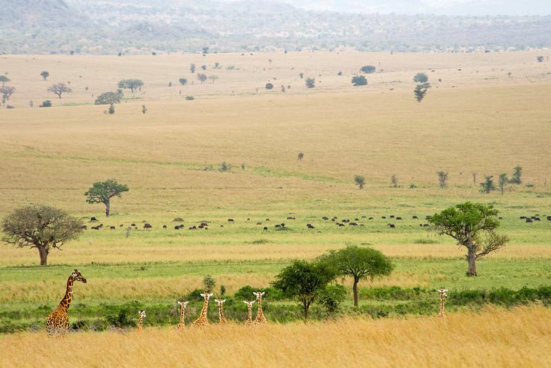 Uganda Wildlife 2009