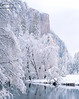Yosemite Valley, early morning snow