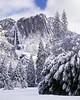 New snow, Yosemite Falls